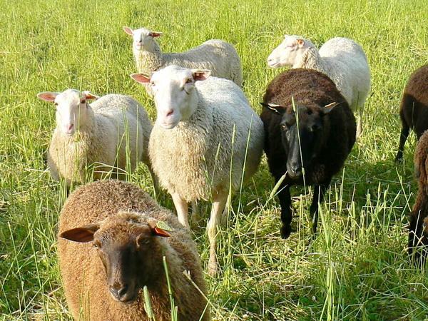 ...und Schafe gibt es zu sehen!